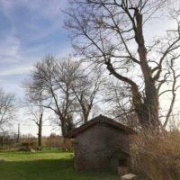Cime - Taille d'entretien - suppression bois mort 1