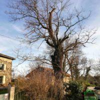 Cime - Taille d'entretien - suppression bois mort 2
