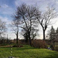 Cime - Taille d'entretien - suppression bois mort 3