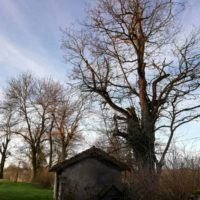 Cime - Taille d'entretien - suppression bois mort 4